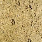 むうちゃんの足跡