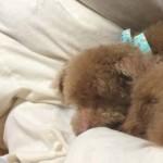 ペットの腫瘍で考えさせられたこと 飼い主の決断