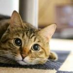 またまた猫カフェに行って、癒されてきました。