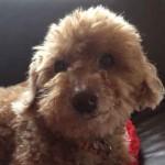 愛犬10歳のワクチン予防接種で迷ってます。