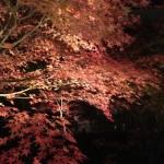 けいはんな記念公園紅葉ライトアップ